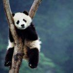 Desiigner – Panda (Roycdc Remix)
